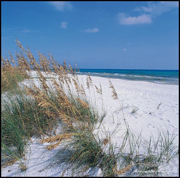 Grayton Beach Florida Images