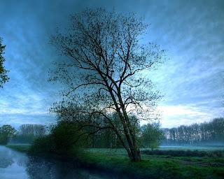 Hazy Blue Tree Nature Wallpaper 1280x1024