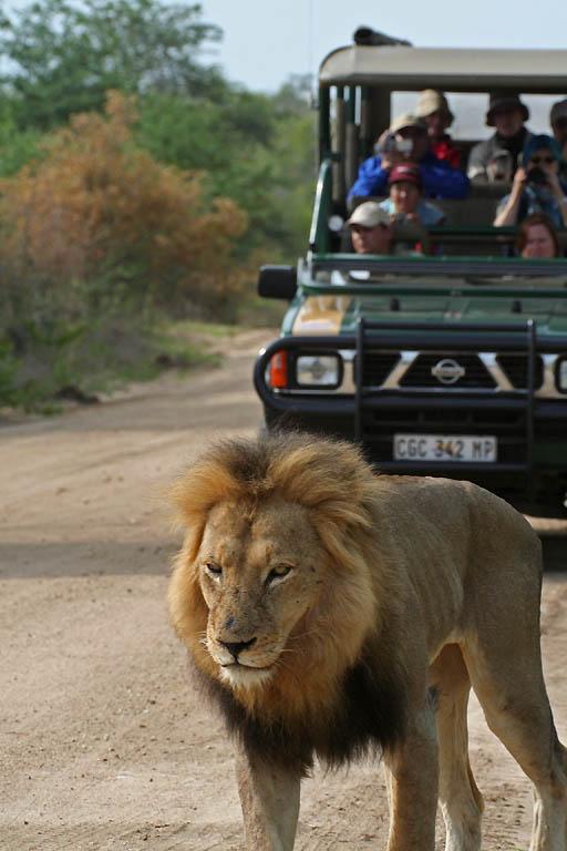 Kruger National Park South Africa  city images : Kruger National Park South Africa Tourism