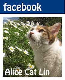 》Facebook