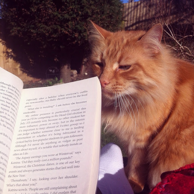 summer book wih fluffy ginger cat