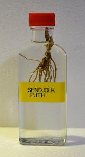minyak senduduk putih