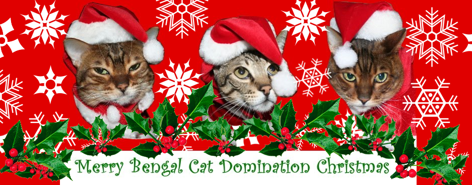 Bengal Cat Domination