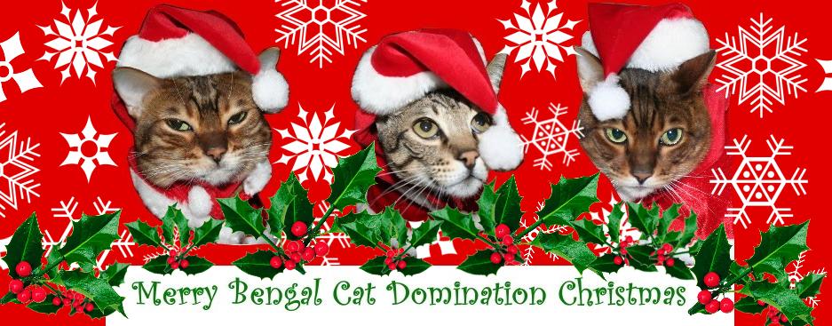 Bengal Cat Domination