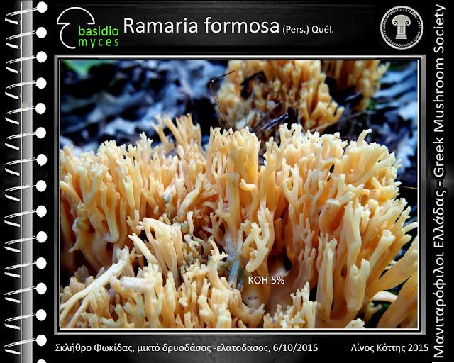 Ramaria formosa (Pers.) Quél.