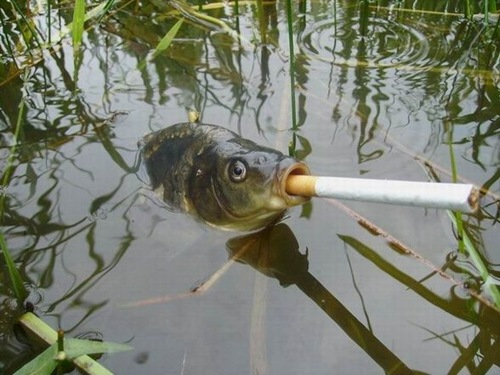 Gallery funny game fishing funny fish funny fishing for Funny fishing pics