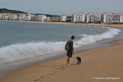 собака у океана
