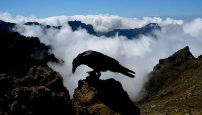Inventario de Fauna - Avifauna