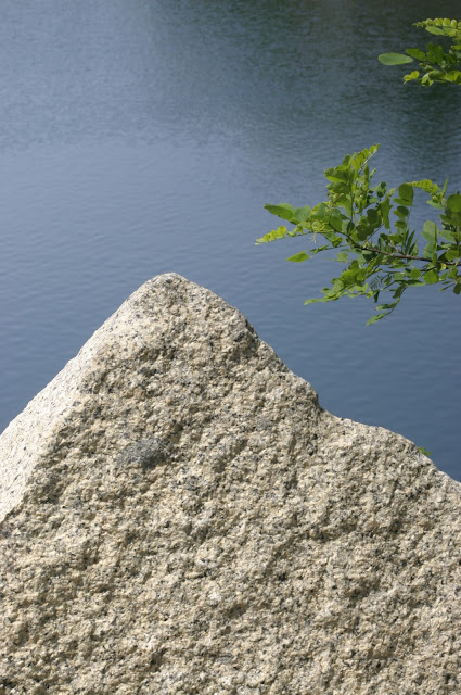 A triangle of granite with branches to the right with water in the background at Halibut Point State Park.