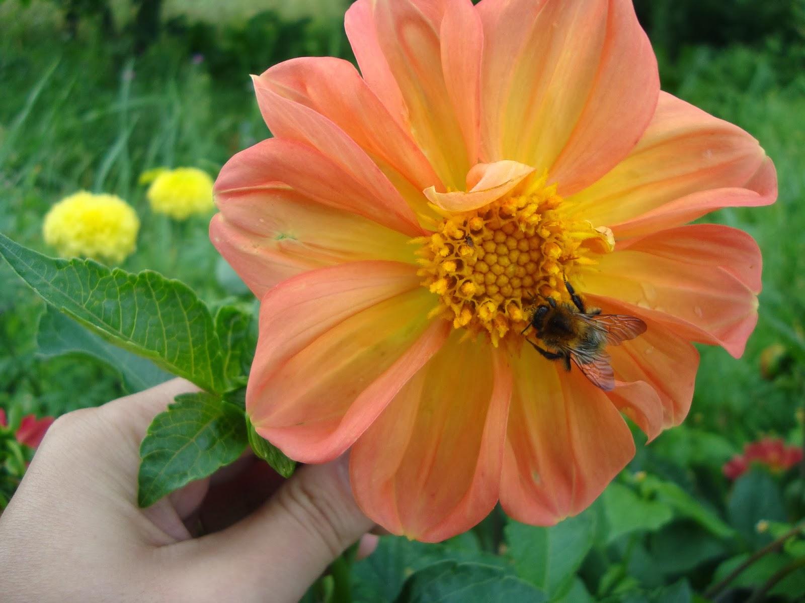 lato, kwiaty, owady