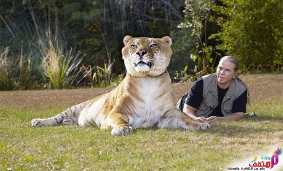 هرقليز,من أضخم وأكبر الحيوانات الهجينة في العالم