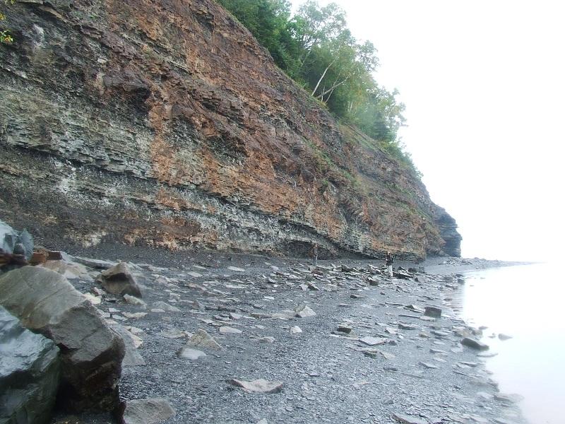 Carboniferous Period Spider The Carboniferous Period