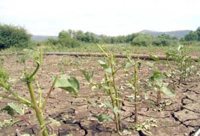 Σήμερα η πληρωμή των παραγωγών για αποζημιώσεις φυτικής παραγωγής και ζωικού κεφαλαίου