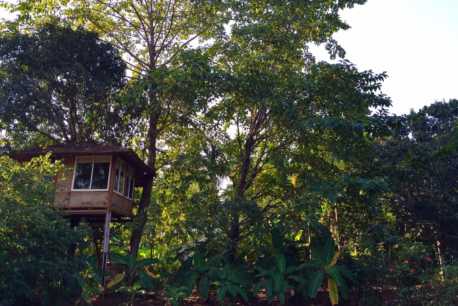 Atithi Parinay Homestay review Konkan Treehouse