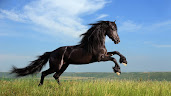 #10 Horse Wallpaper