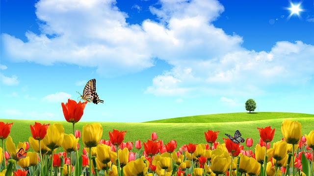 paisajes rosas rojas amarillas mariposas