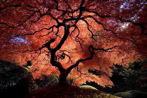 Gambar Pohon Daun Merah Indah Wallpaper Pemandangan Alam Cantik