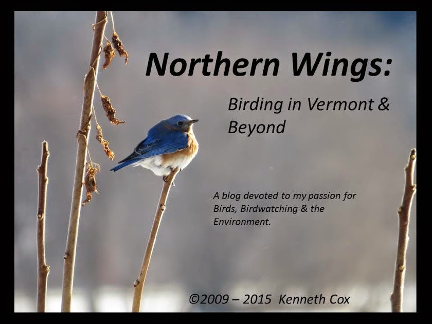 NorthernWings