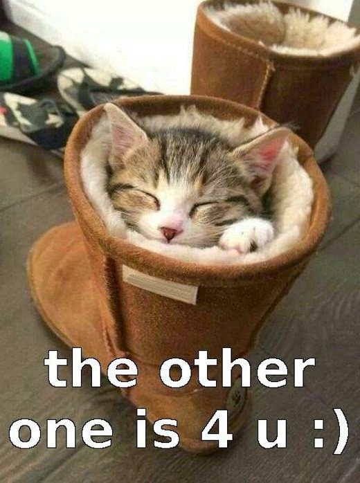 UGGs cat meme