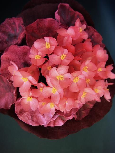 Matrimonio eco Roma bouquet da sposa con fiori freschi e di carta color marsala