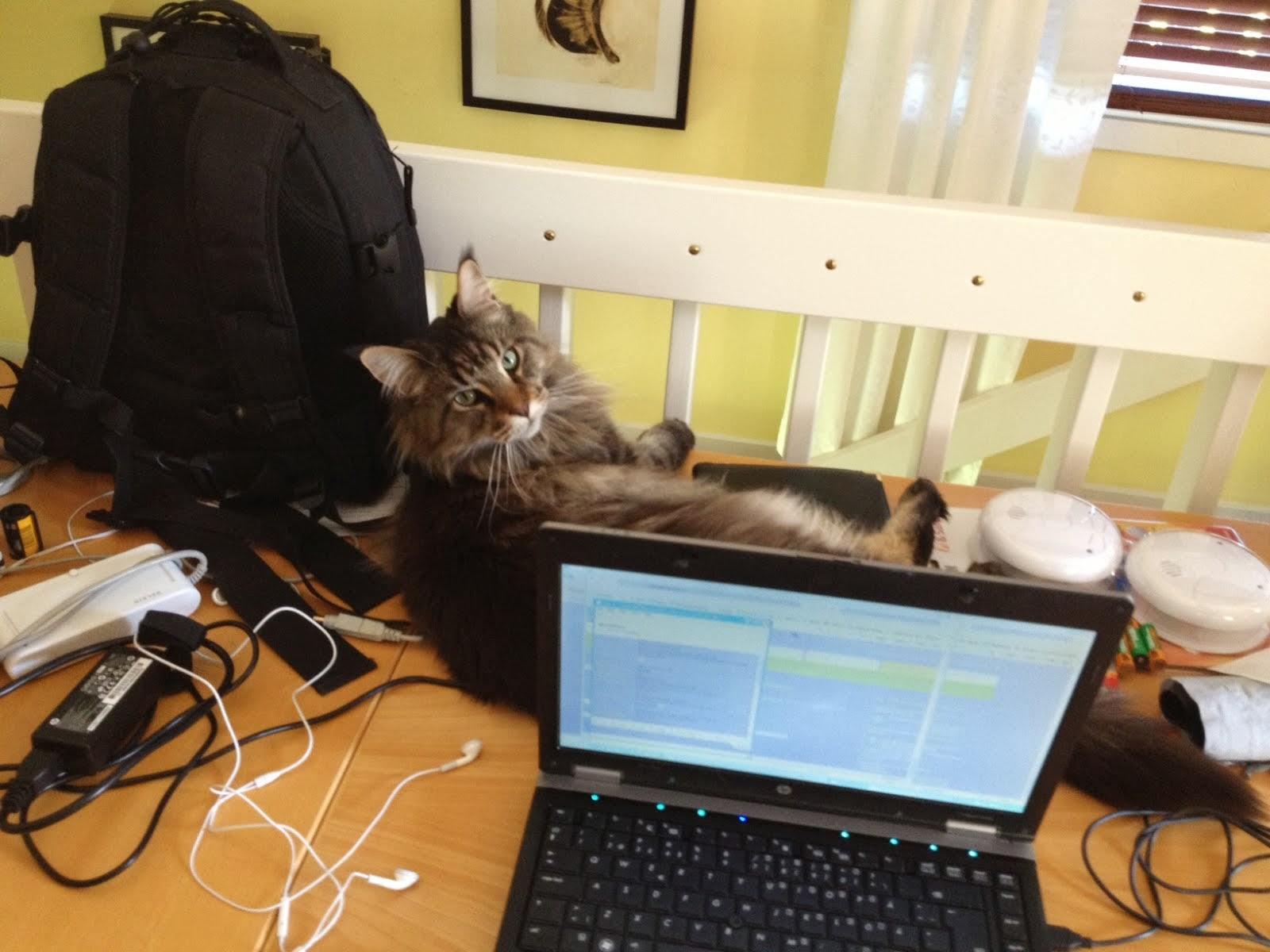Prinsen håller mig sällskap vid datorn