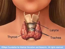 Obat Kelenjar Tiroid Herbal