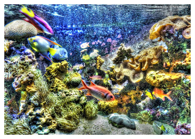 Monaco Oceanegraphique Fish