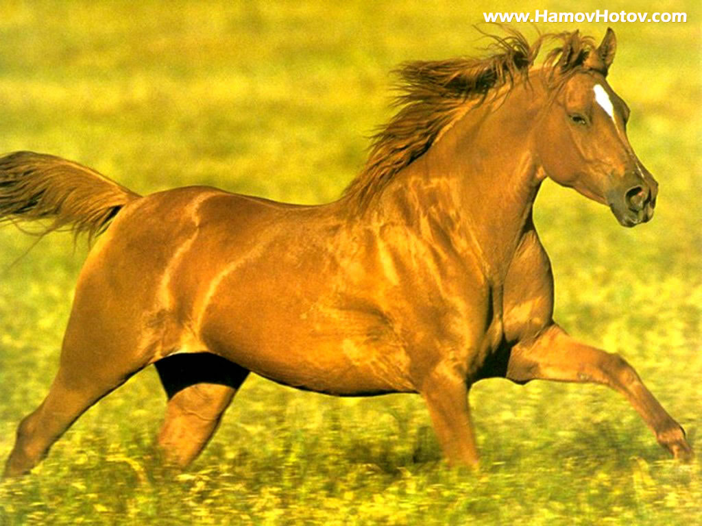 Great   Wallpaper Horse Country - running_horse  Perfect Image Reference_809524.jpg