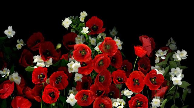 fotos-de-flores-rojas