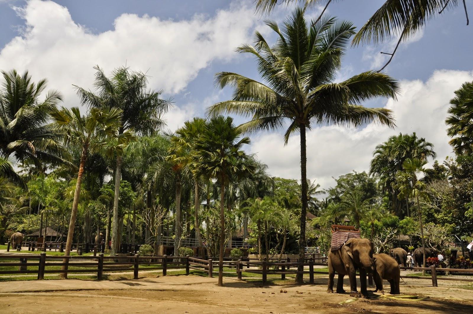 INDONESIA: Excursiones y actividades con niños por los alrededores de Ubud en Bali