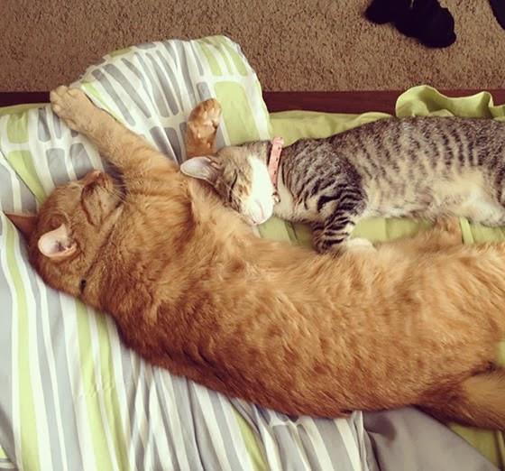 Foto Chazz dan Samus tidur bareng
