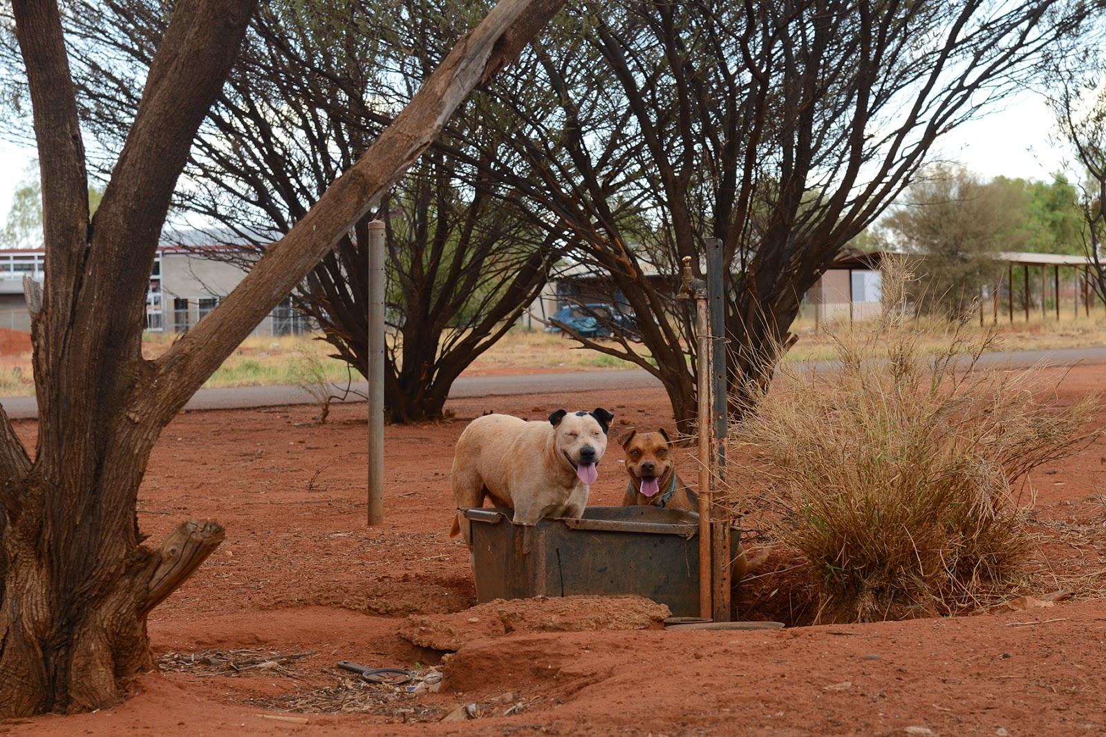dogs desert water
