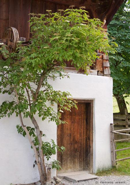 Bauerngarten - Holunder, Holunder im Bauerngarten und seine Tradition