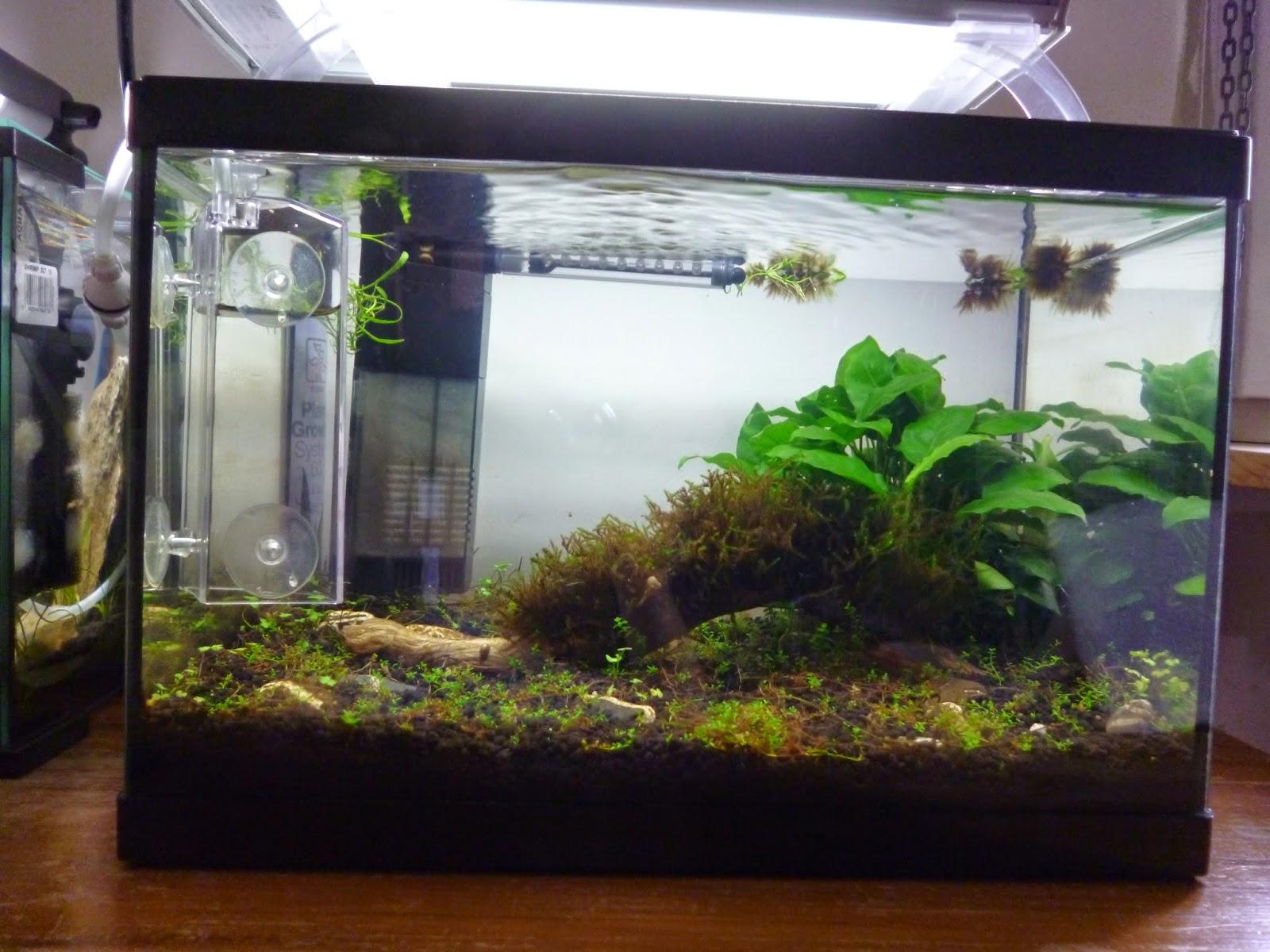 Aquariums poissons et plantes d 39 eau douce juin 2014 for Poisson et aquarium