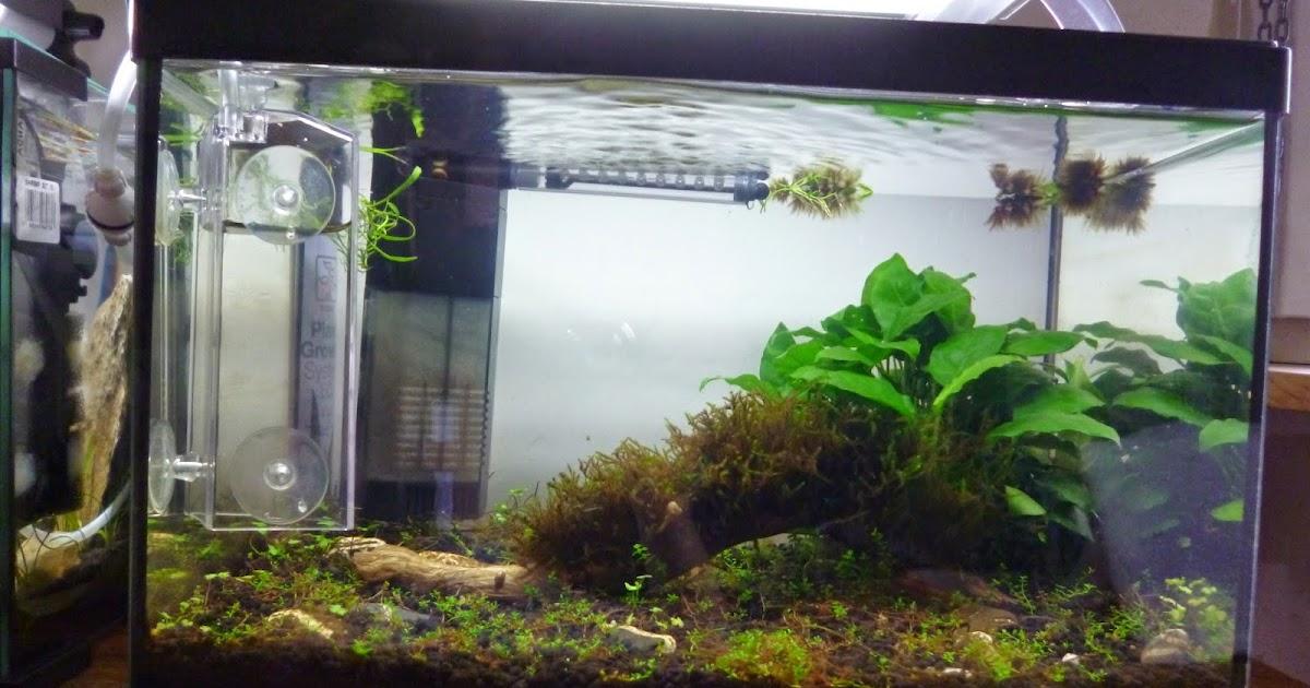 Aquariums poissons et plantes d 39 eau douce les nano for Nano aquarium eau douce