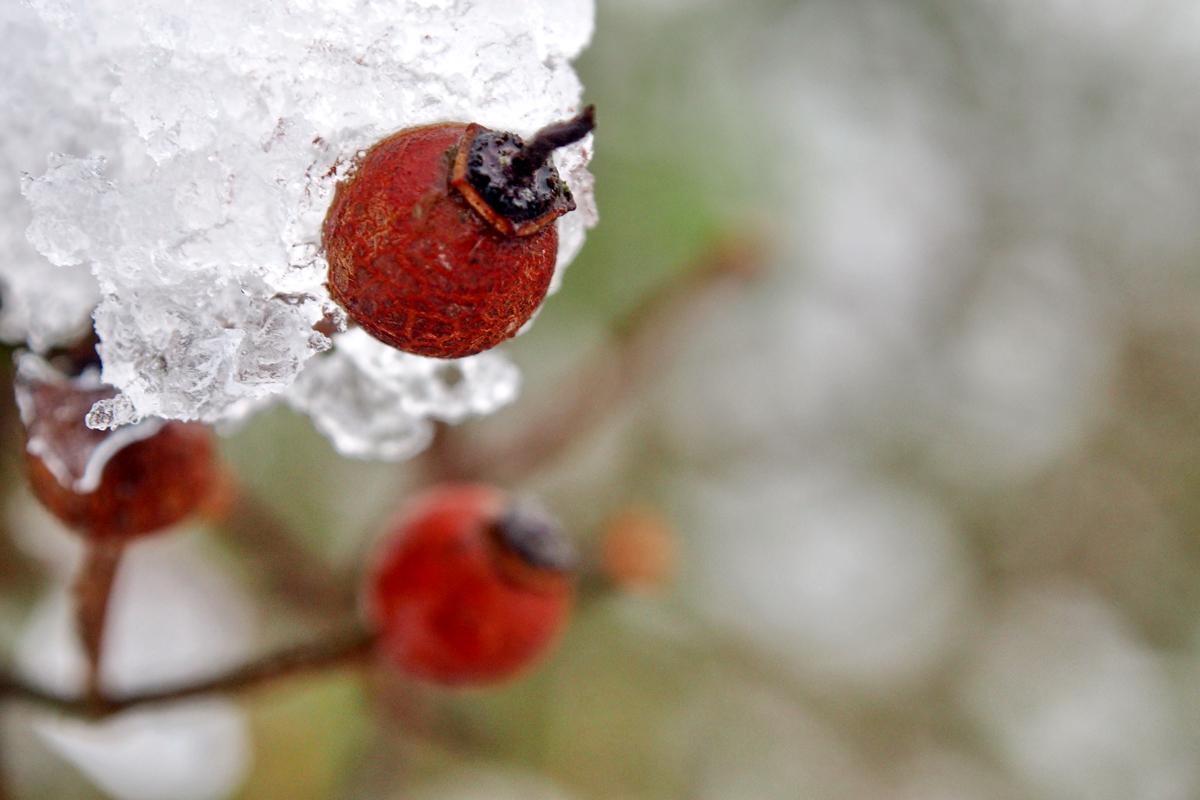 """Winterliche Impressionen aus dem Westfalenpark - """"Fee ist mein Name"""""""