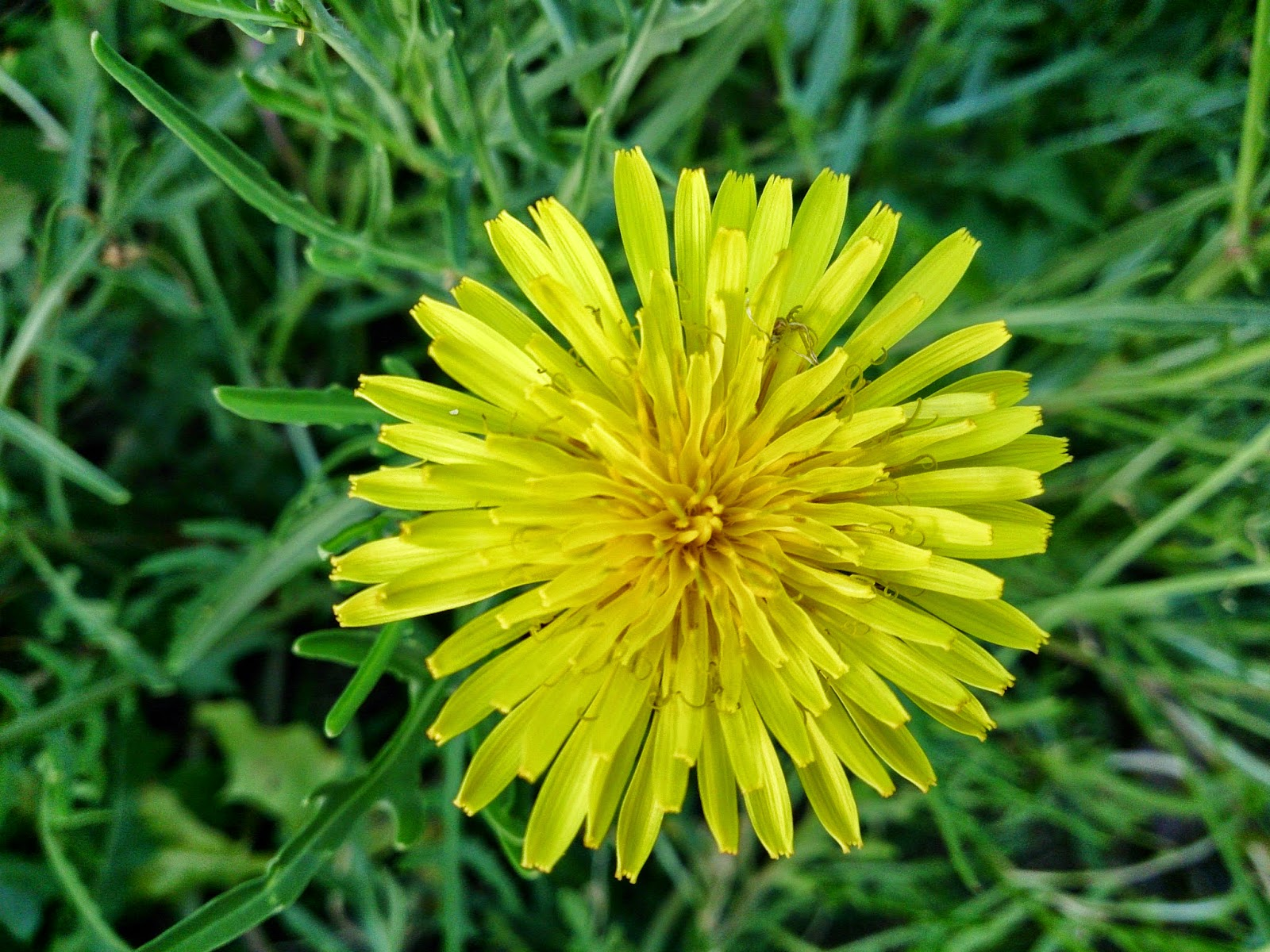 Yellow Flowers Names And Pictures Image