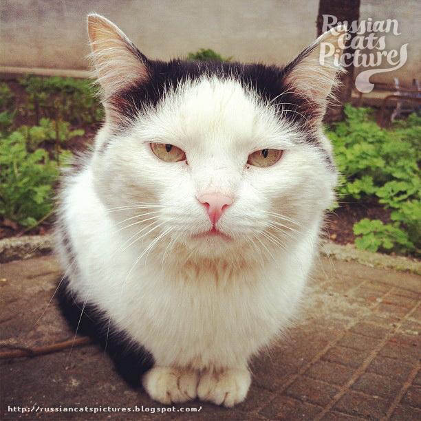 Sad Instacats Cat 03