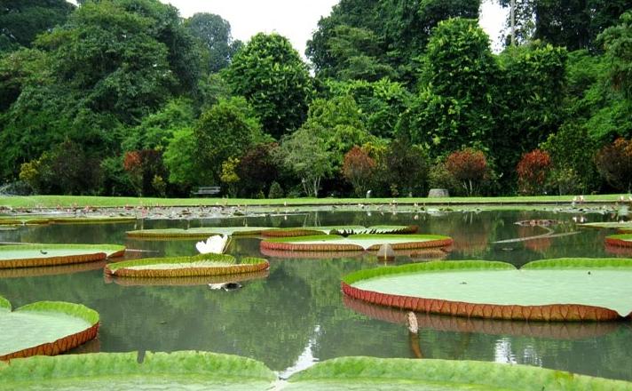 Tempat Wisata di Bogor dan Sekitarnya Kebun Raya Bogor
