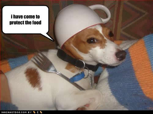 funny dogs most photos - photo #19