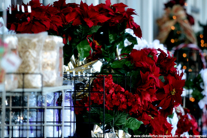 Poinsettia flowers Christmas decorations shopping malls photography photoblogging Euphorbia pulcherrima