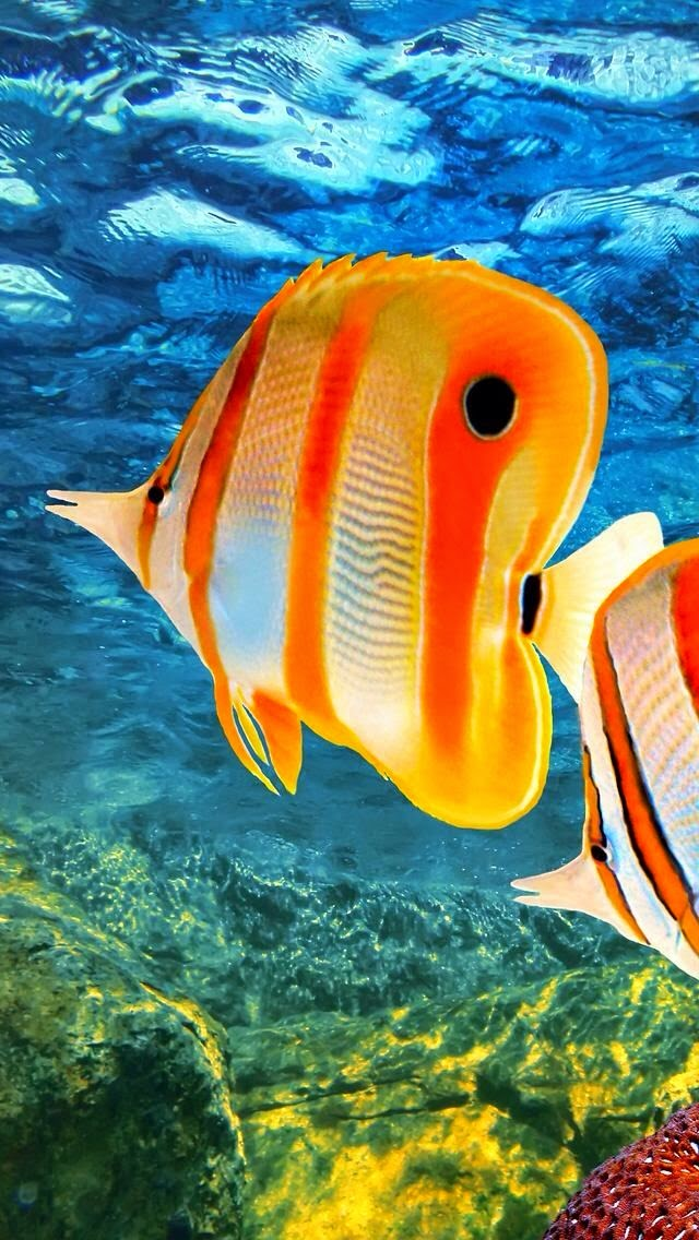 Tropical Fish in Australia.*
