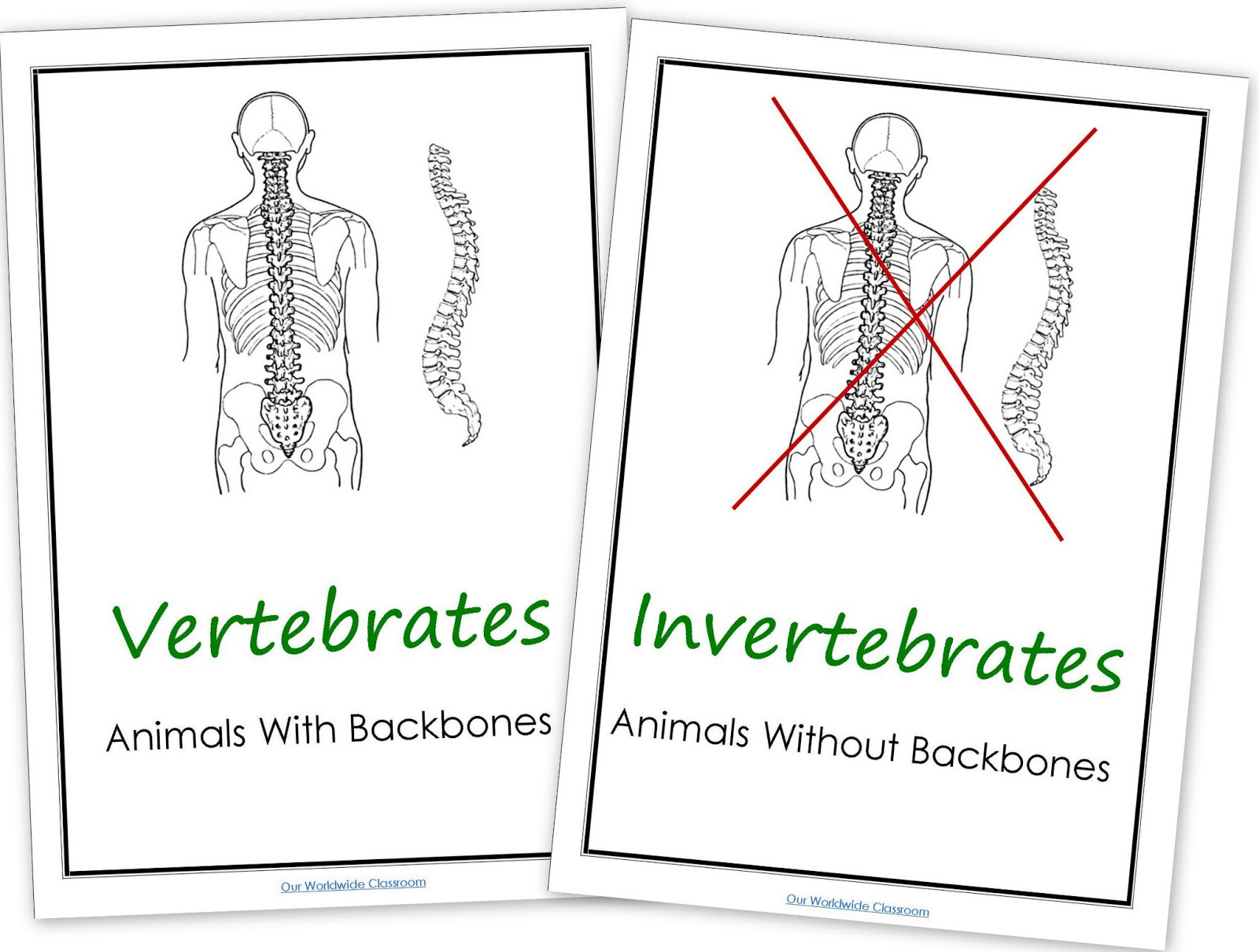 Worksheets Vertebrates And Invertebrates Worksheets amparos corner natural2 animals corner