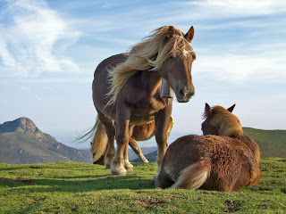 hill horses (13)