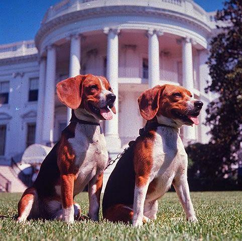 Lyndon B Johnson Dog Ears Beagle