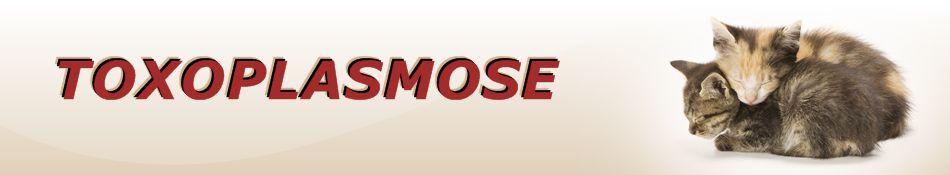 Toxoplasmose, symptômes et le traitement de la toxoplasmose