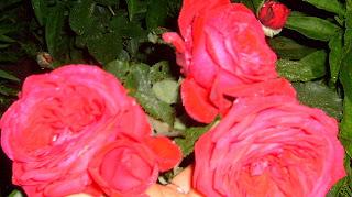 Для аппетита используйте масла розы или аромат