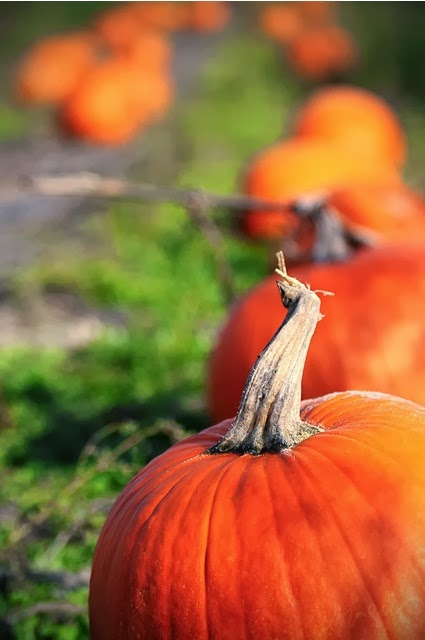 List of Mid-Michigan Pumpkin Patches