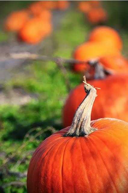 List of Mid-Michigan Pumpkin Patches