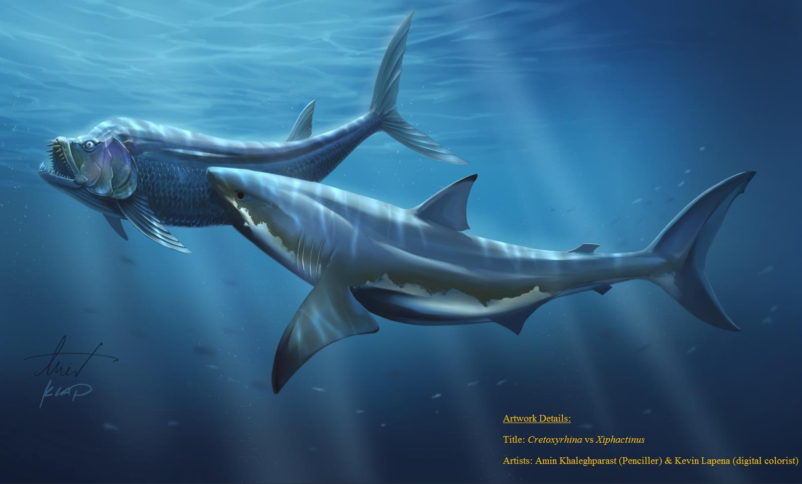 Extinct Animal of the Week: Shimada Loves Sharks